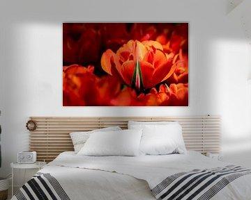 Queensday-Tulpe: Eine Tulpe mit Schleife für den Königinnentag von Rina Bredie