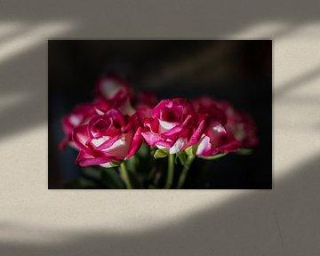 The Rose von Nildo Scoop