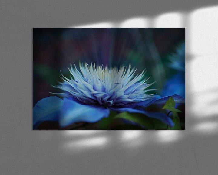 Sfeerimpressie: Stralende verdroomde blauwe Clematis van Wieland Teixeira