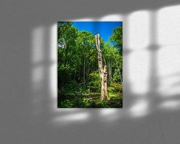 Un vieil arbre dans la nature