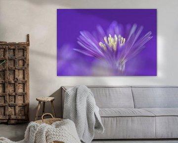 Violett   Blume von Marianne Twijnstra-Gerrits