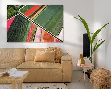 Diagonale lijn tussen de bloembollen in Noord-Holland