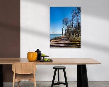 Gespensterwald an der Küste der Ostsee in Nienhagen von Rico Ködder