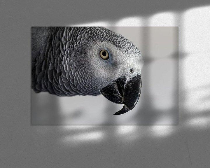 Beispiel: Grau-Rotschwanz-Papagei von Anjo ten Kate