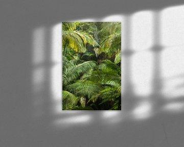 Australiens Palmen Dschungel von Jiri Viehmann