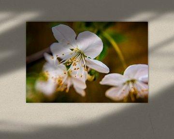 Blüte von Photologic  Fotografie