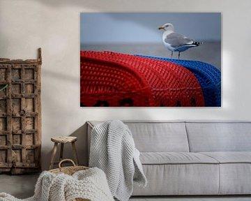 Moewe auf blauen und roten Strandkörbe am Wattenmeer! von Alice Berkien-van Mil