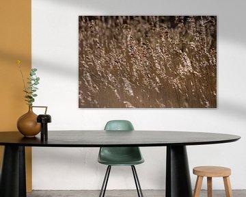Wuivende rietpluimen van Laura Weijzig