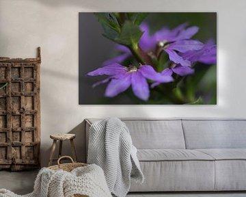 Blühende violette Scaevola von Bianca Muntinga