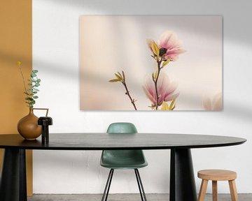Magnolien-Blüten von Nancy van Verseveld
