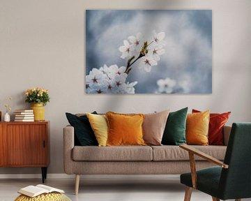 Blüte von Nancy van Verseveld