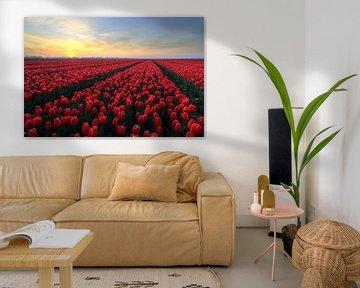 Zonsopkomst boven rode tulpen van FotoBob