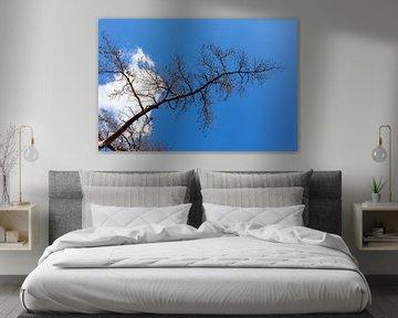 Boom tegen blauwe lucht van DuFrank Images
