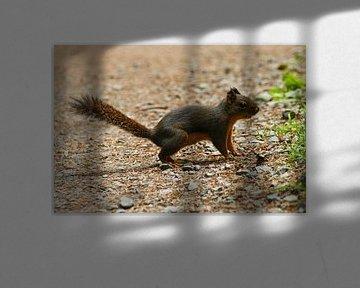 Eichhörnchen auf einem Waldweg in Oregon von Jeroen van Deel