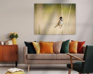 Vogel die Schilfammer von Wendy Tellier - Vastenhouw