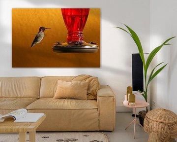 Kolibri hängt in der Luft von Jeroen van Deel