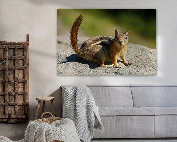 Neugieriges Erdhörnchen im Crater Lake National Park von Jeroen van Deel