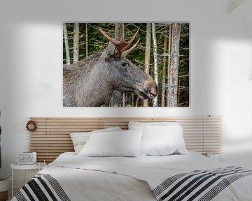 Eland in het bos van Lars-Olof Nilsson