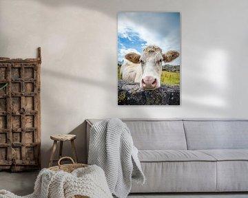 Neugierige weiße Kuh von Hilda Weges
