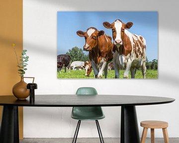 Jonge roodbonte koeien van Hilda Weges