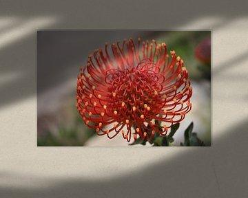Blumen von Christel Smits