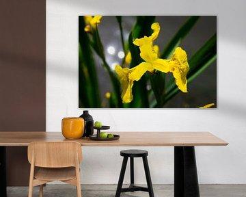 Gelbe Blume mit im Wasser reflektierendem Sonnenlicht im Hintergrund von Marco Leeggangers