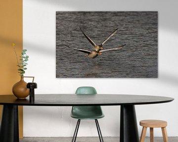 Vliegende ganzen van Ruud Lobbes
