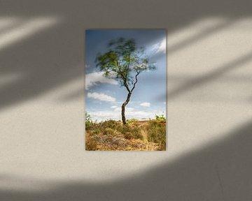 L'arbre qui danse sur Mark Bolijn