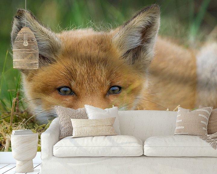 Sfeerimpressie behang: Jonge vos van Rando Kromkamp