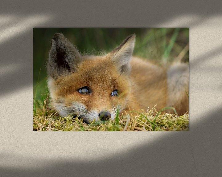 Impression: mignon petit renard sur Rando Kromkamp