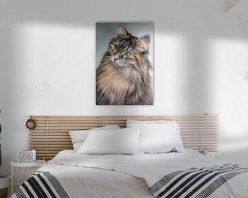 Langharige kat van YesItsRobin