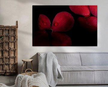 Rote Camelliablüten mit Tropfen von Gerda Hoogerwerf