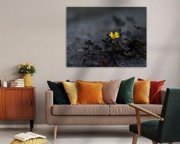 Sauerklee mit gelber Blüte von Gerda Hoogerwerf