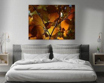 Herfstbladeren in een loofbos in de Elzas, Frankrijk van Koolspix
