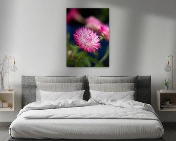 Violette Blüte von Lisa Becker