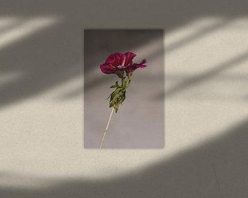 Blume von Carla Van Iersel