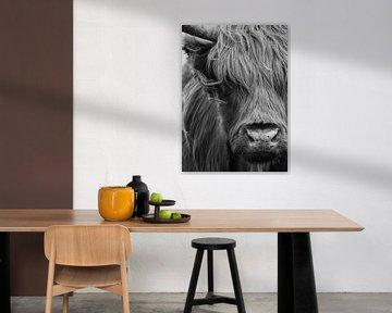 Schottische Highlander Porträt schwarz-weiß von Marjolein van Middelkoop