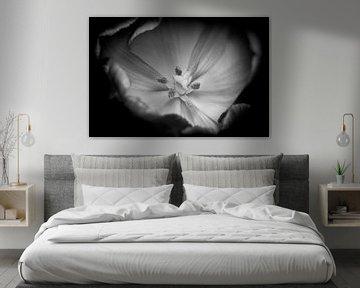 Tulpe schwarz-weiß von Hans Vos Fotografie