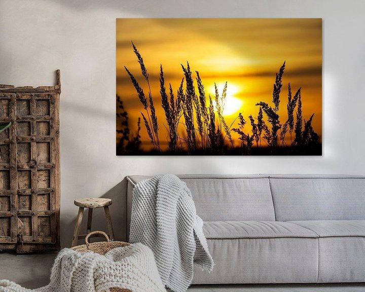Impression: Silhouettes de plantes au coucher du soleil sur Frank Herrmann