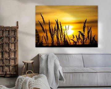 Pflanzensilhouetten im Sonnenuntergang