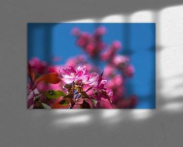 Arbre à fleurs de cerisier