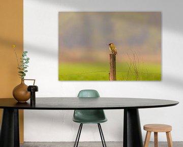 Groene specht rustend op een paal in mistig landschap van Photo Henk van Dijk