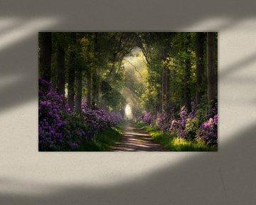 Weg durch die blühenden Rhododendren von Edwin Mooijaart