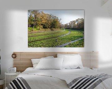 Wasabi planten en boeren in een rivier van Mickéle Godderis