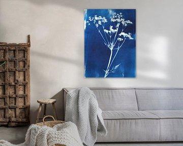 Cyanotype wilde bloem