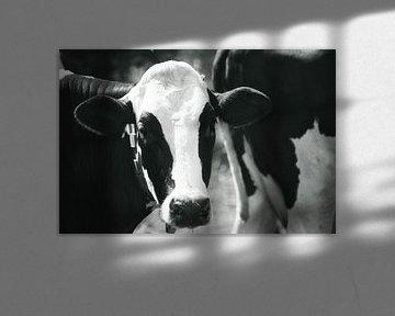 Schwarz-weiße Kuh im Sonnenlicht von J..M de Jong-Jansen
