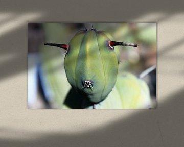 Kaktus mit Gesicht wie Schaf oder eines Außerirdischen von Anna van Leeuwen