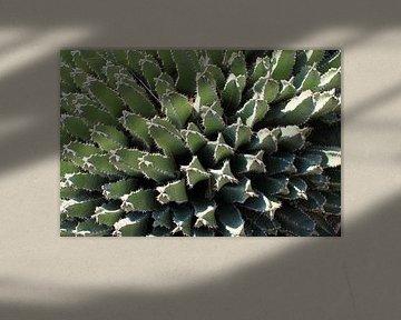 Kaktus in Sizilien von Anna van Leeuwen