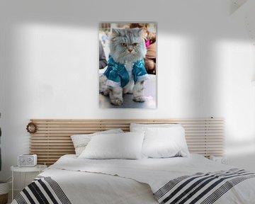Kat met blauw jasje van Anna van Leeuwen