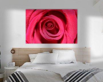Makro einer roten Rose von Anna van Leeuwen